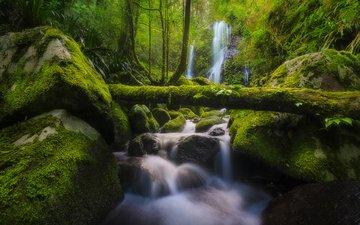 река, природа, камни, лес, ручей, водопад, мох, австралия, бревно, chalahn falls, elabana falls, lamington national park
