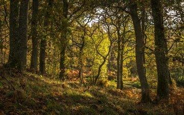 трава, деревья, лес, шотландия, pitlochry