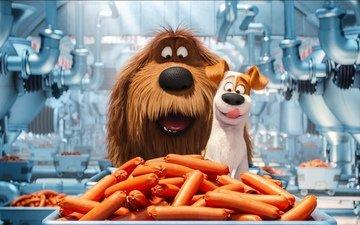 жизнь, собаки, сосиски, тайная, домашних, животных, тайная домашних животных