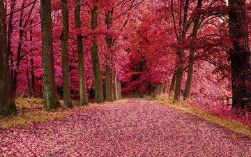 дорога, деревья, лес, осень, деревь, осен, автодорога