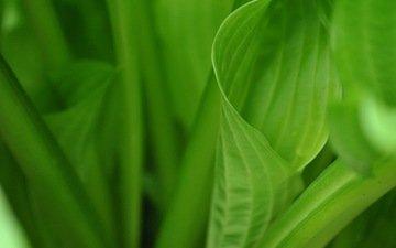 природа, листья, зеленые, растение, зеленые листочки