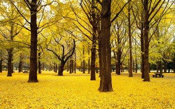 деревья, природа, пейзаж, парк, осень, япония