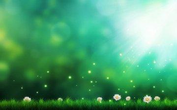 цветы, трава, фон, ромашки
