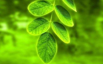природа, дерево, листья, зелёный, лист