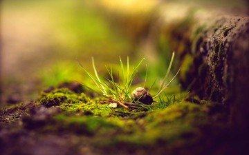 растения, макро, мох, улитка