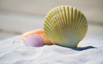 природа, песок, пляж, ракушки, песка, на природе, shells