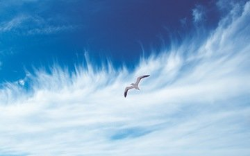 небо, облака, полет, чайка, птица