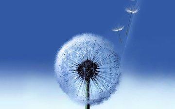 фон, синий, цветок, галактика, одуванчик, семена, пух, пушинки, самсунг, былинки
