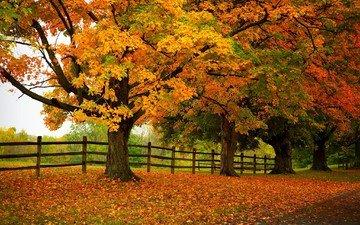 дорога, деревья, природа, лес, листья, парк, осень, забор, тропинка, прогулка, расцветка, деревь, опадают, на природе, осен, автодорога, листья, красочная