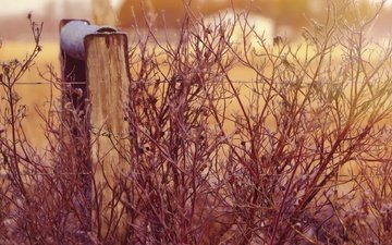 растения, проволока, забор, провод, боке, изгородь, ветками