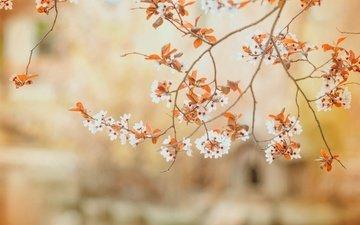 цветы, ветви, весна, цветы, ветками, бутончики
