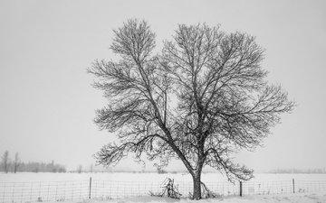 снег, дерево, зима, туман, забор, холод, изгородь, дерево