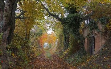 деревья, листья, осень, тропинка, разруха, здание, двери, деревь, pathway, way, двер, осен, плющ, листья, ruin, autumn colors, countryside