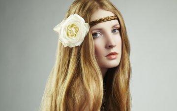 девушка, цветок, взгляд, лицо, длинные волосы, косичка, белая роза