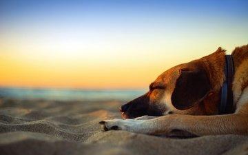 закат, море, песок, пляж, собака, сумерки, песка, dusk, полумрак, мечтает, cобака, приморский, sleepin