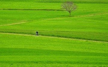 дорога, трава, дерево, поле, всадник, тропинка, зеленая, мужик, велосипедист, байк, fields, pathway, way, грин, дерево, countryside, farmland