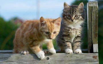 a couple, kids, kittens