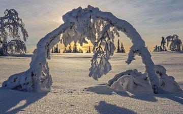 деревья, снег, зима, швеция, арка, швеции, лапландия
