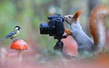 поза, фотоаппарат, белка, синица, лесной фотограф