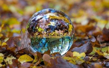 отражение, листва, осень, сфера, шар, стеклянный шар, стеклянный