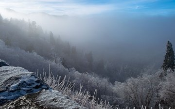 облака, горы, снег, природа, дерево, лес, зима, туман, мороз, склон