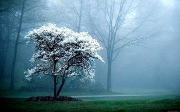 свет, природа, растения, ветви, капли, цвет, дождь