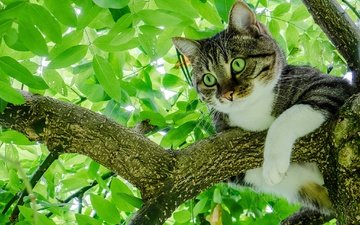 дерево, листья, кот, лето, кошка