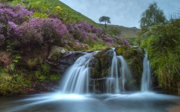 холмы, водопад, англия, вереск, каскад, пик-дистрикт, peak district, fairbrook waterfall