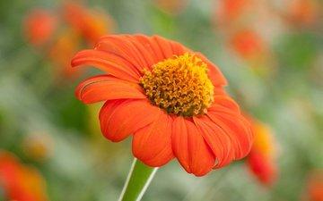 природа, цветок, лепестки