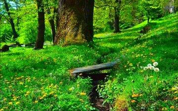 цветы, трава, цветение, зелень, парк, весна, одуванчики, весенние, грин