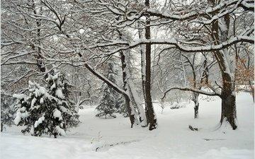 деревья, снег, зима, парк, мороз, деревь, изморозь, wintet
