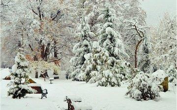 деревья, снег, зима, парк, скамейки, деревь, изморозь