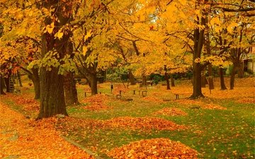 деревья, парк, листва, осень, деревь, опадают, осен, листья