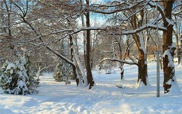деревья, снег, зима, лучи, парк, деревь