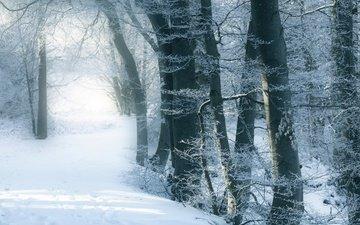 деревья, снег, зимний лес