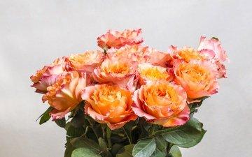 розы, букет, оранжевые, роз