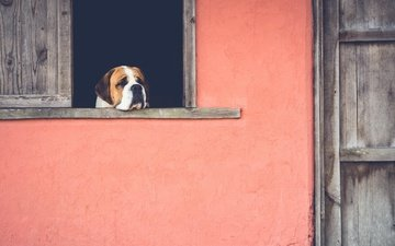 sadness, dog, house, window, waiting