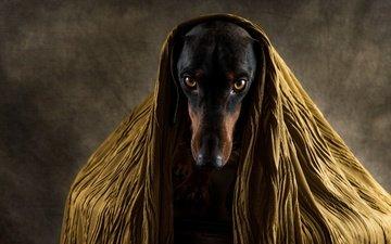 глаза, морда, грусть, собака, друг, пес, нос