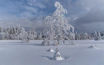 деревья, снег, елка, зима, пейзаж