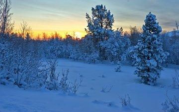 деревья, снег, закат, зима, кусты, норвегия, норвегии, hedmark fylke, nordli, хедмарк