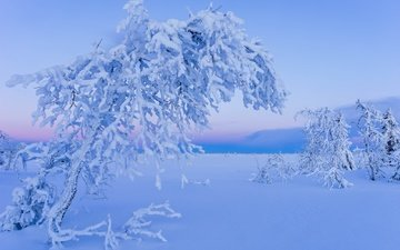 snow, tree, winter