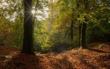 деревья, солнце, лес, лучи, листва, осень, франция, франци, бретань, уегоа, huelgoat