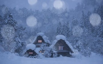 деревья, снег, лес, зима, домики, деревня, япония, японии, сиракава, shirakawa-go