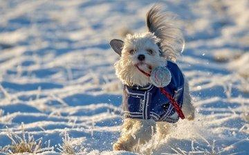 snow, winter, mood, dog, toy, walk