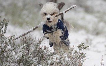 snow, winter, dog, jump, walk, doggie, stick