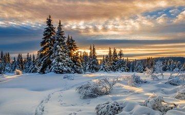 снег, зима, следы, ели, норвегия, норвегии, лиллехаммер