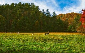 трава, деревья, солнце, лес, осень, поляна, сша, олени, стадо, северная каролина