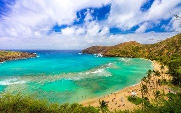 the sky, clouds, sea, beach, horizon, coast, palm trees, usa, stay, bay, tropics, hawaii