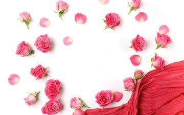 цветы, бутоны, розы, лепестки, белый фон, романтик, цветы, роз, пинк