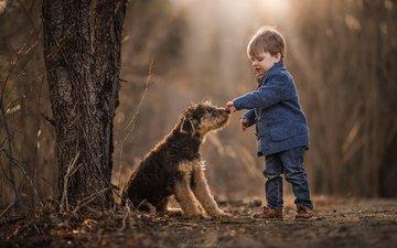 собака, мальчик, друзья